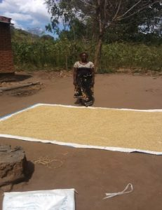 Edna drying her maize yield