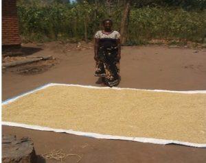SORT Project Enhances Livelihoods in Kasikizi