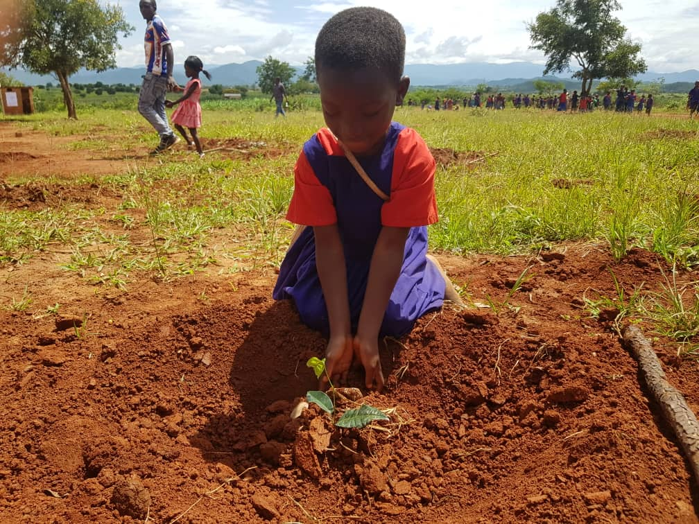 Early grade learner at Nandanga primary school planting a tree during the launch