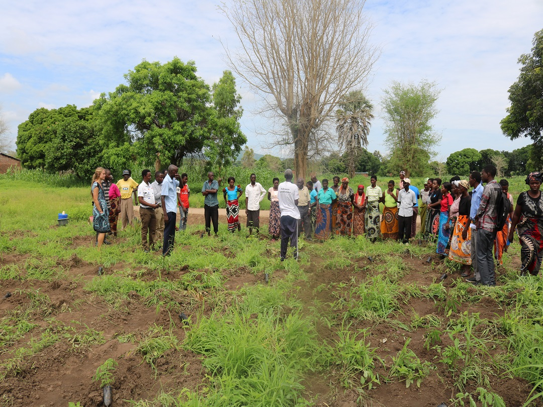 Development Desk Supports Tree Planting in Mwangolera Village